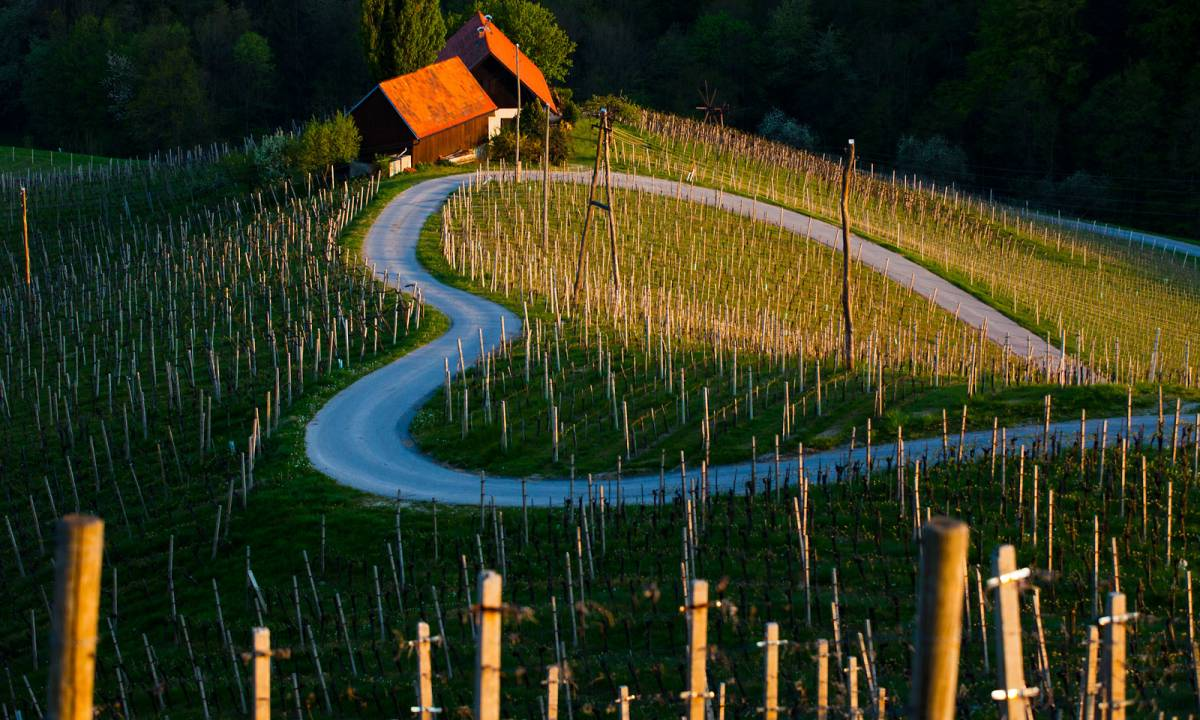 Spicnik wijnroute Slovenie vakantie